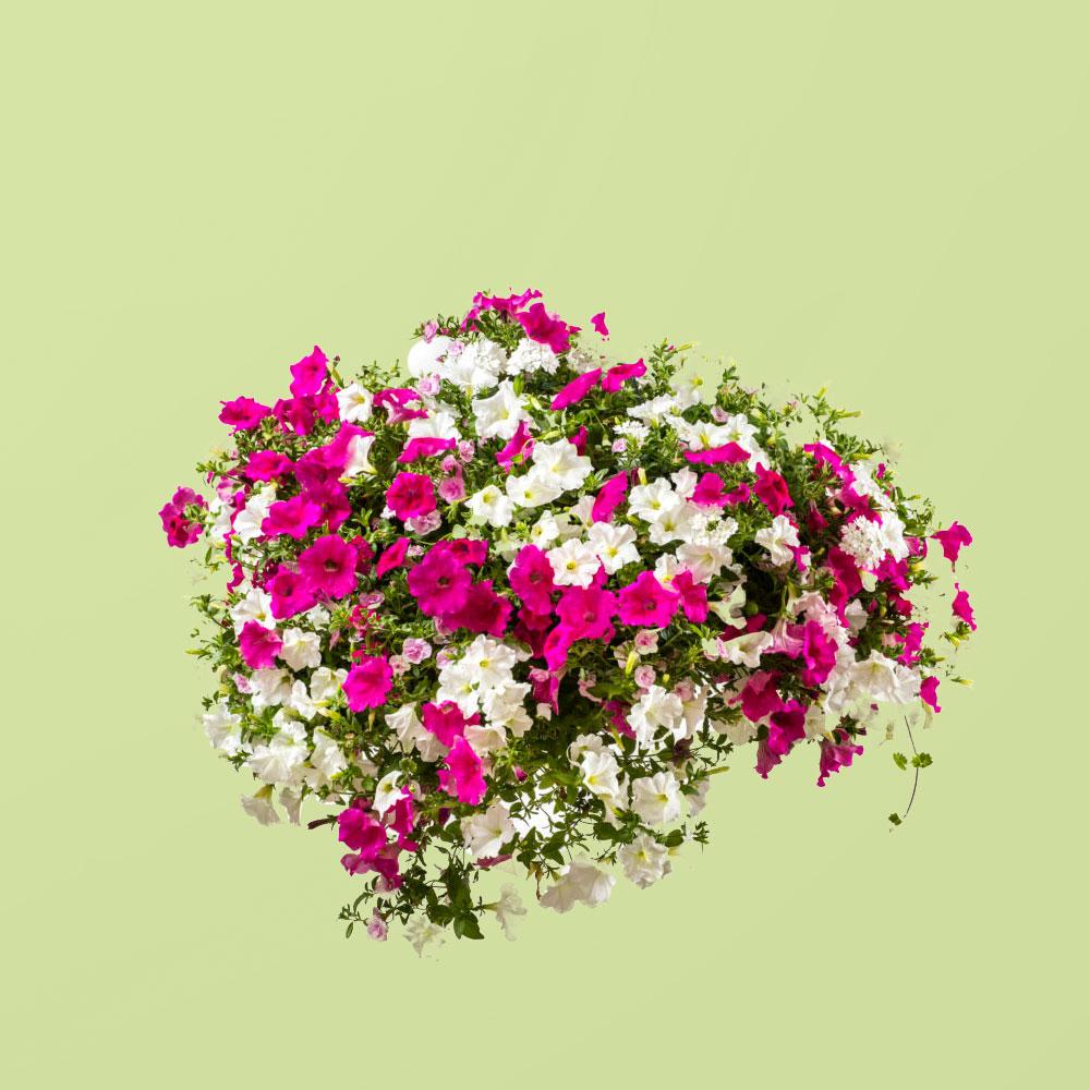 FleurigBuiten Spring mengsel